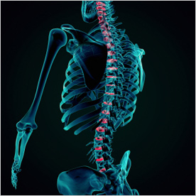 Physiotherapists / Chiropractor - London | London Spine & Joint Clinic